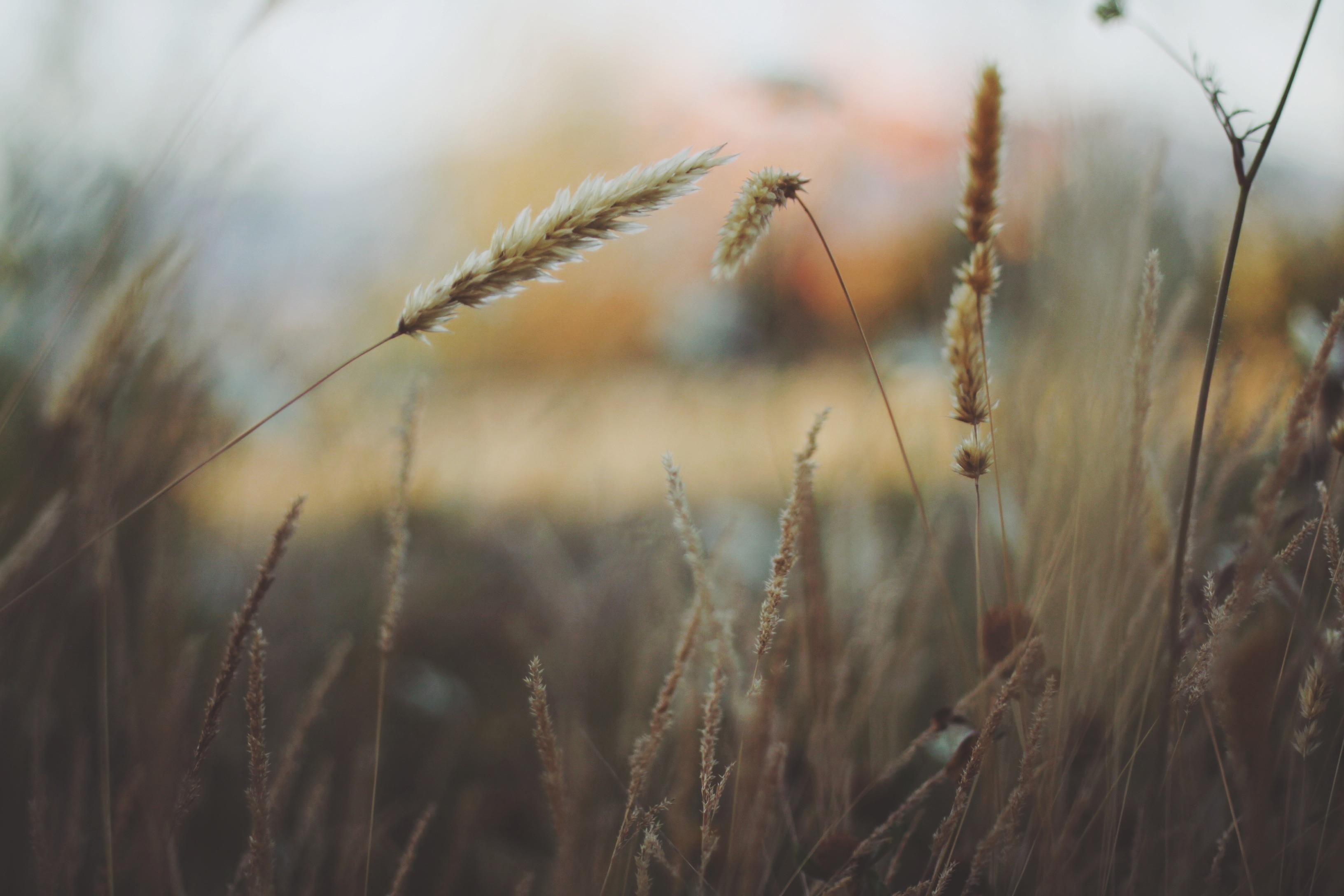 grass-336524
